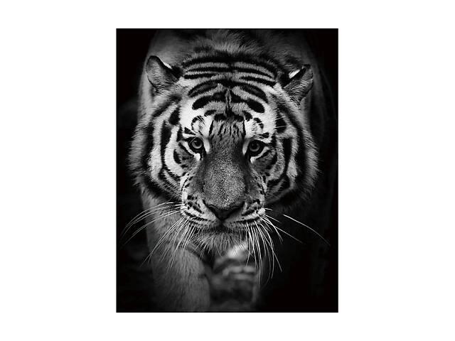 купить бу Картина на стекле Signal TIGER 80X120 (TIGER80) в Одессе