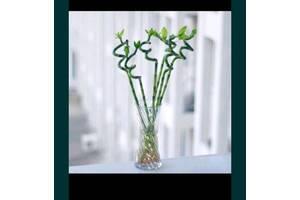 мини бамбук декор бонсай