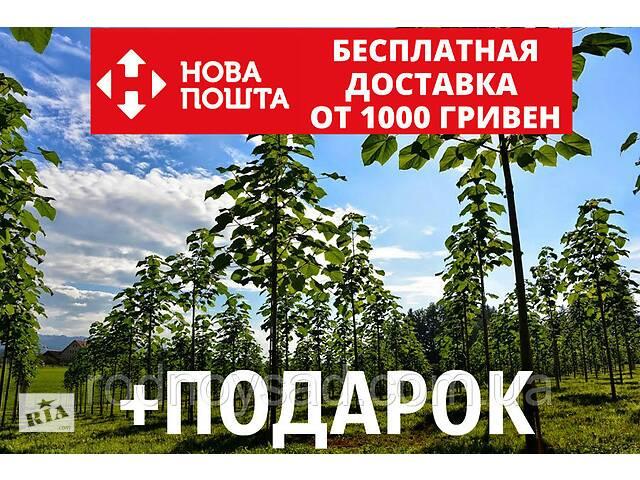 Павловния Shan Tong семена (около 1000 шт) быстрорастущая для саженцев (шантонг, шан тонг, ShanTong) -25°С- объявление о продаже  в Андреевке