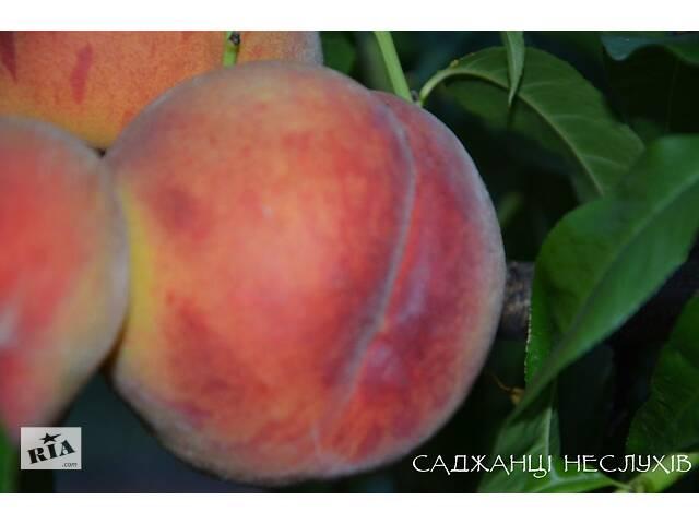 Саженцы персика 20 сортов, саженцы персика