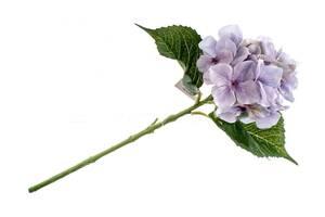 Искусственный цветок SKL11-249679