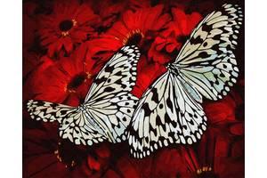 """Картина по номерам. Brushme """"Бабочки на цветах"""" GX29432"""