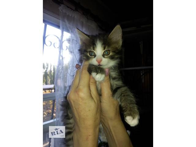 бу Домашние котята в заботливые руки в Одессе
