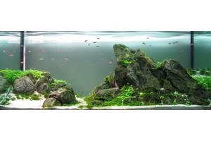 Дизайн аквариума Днепр