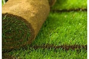 Газон рулонный, уход и восстановление газонов, озеленение , автополив
