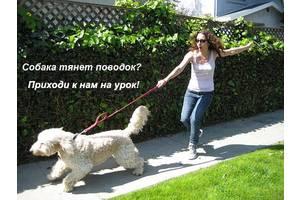 Курс зоопсихологии и коррекции поведения для владельцев собак, кинологов и дрессировщиков Он-лайн