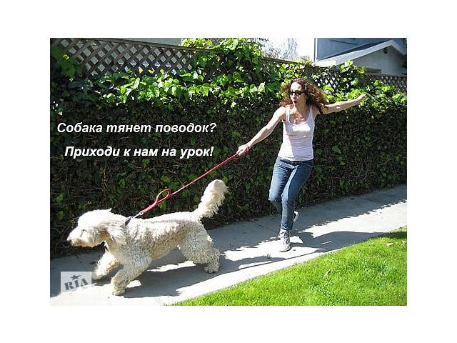 бу Курс зоопсихології та корекції поведінки для власників собак, кінологів і дресирувальників  в Україні
