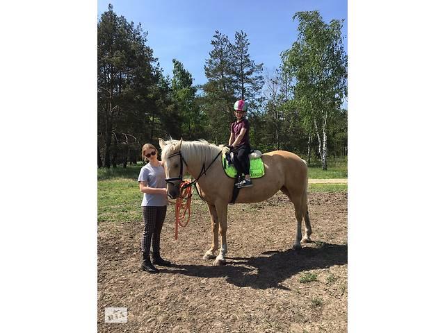 продам Конные Прогулки , Лошади Пони На Праздник,заказать Пони Для Ребёнка  бу  в Украине