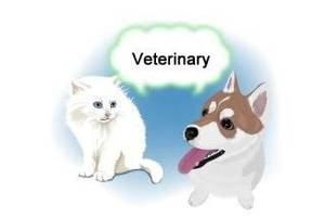 Ветеринарная бесплатная консультация О9З-408-О9-З6