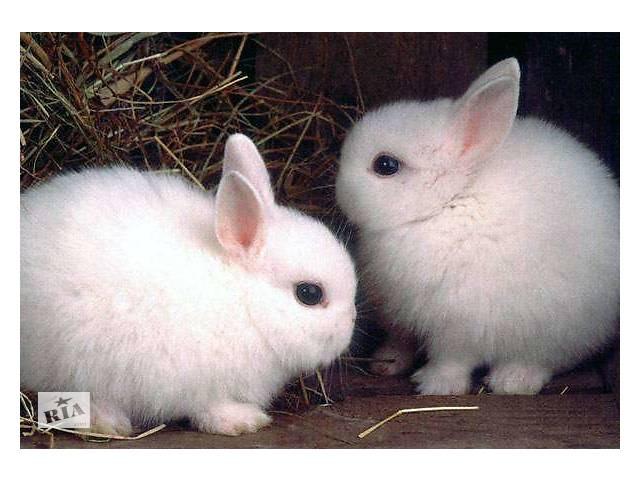 бу Кролик декоративный в Виннице