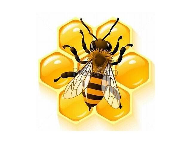 продам Продаю мед бу в Тернополе