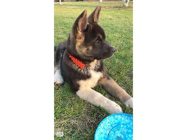 Продаётся щенок недорого - объявление о продаже  в Киеве