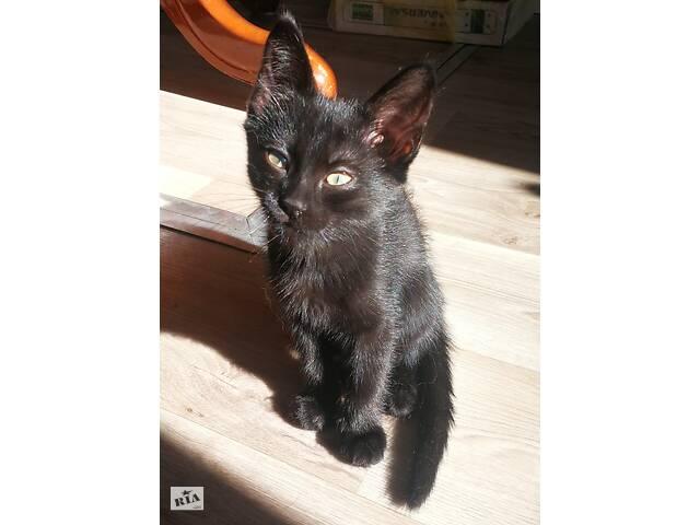 """бу Хвостики из банды """"Черная кошка"""" ищут именно вас  в Харкові"""
