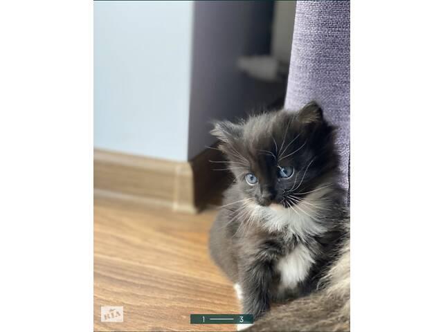 продам Віддам котиків в добрі руки!!! бу в Тернополе