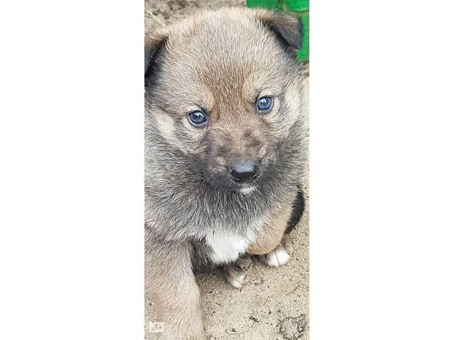 купить бу Отдам щенков в хорошие руки в Лимане (Красный Лиман)
