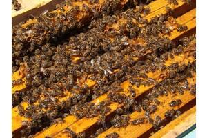 Пчелопакеты карпатской породы