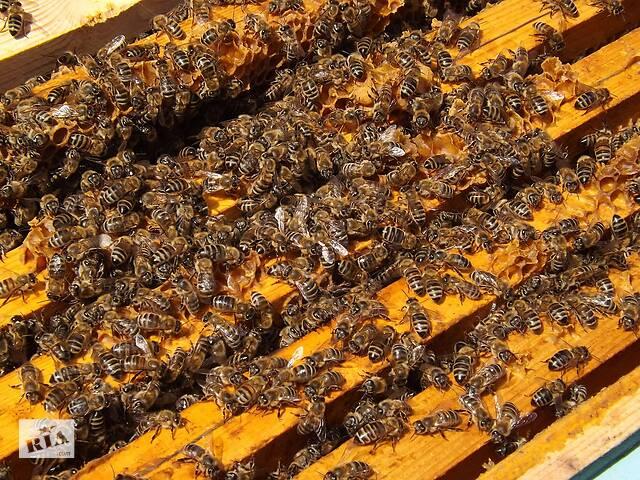 купить бу Бджолопакети карпатки з доставкою в Золочеве