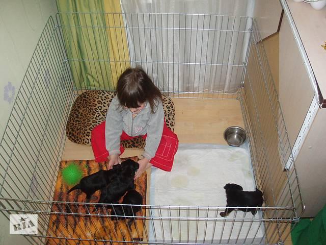 продам Загон, барьер, вольер, манеж, клетка для собак щенков котят 100х100х60(высота) бу в Киеве