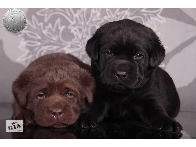 продам Породные щенки с интересным родословной. питомник бу в Киеве