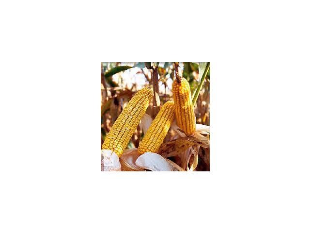 купить бу Купити насіння кукурудзи БК Бурштин в Новомосковську