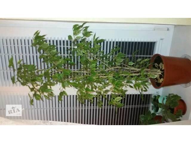 Комнатные растения, рассада и цветы- объявление о продаже  в Запорожье