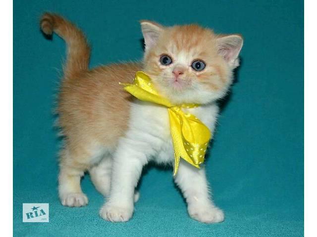 Кошки, коты, котята- объявление о продаже  в Мариуполе (Донецкой обл.)
