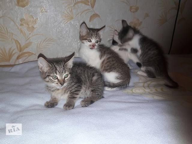 продам Котята от домашней кошки бесплатно бу в Шостке