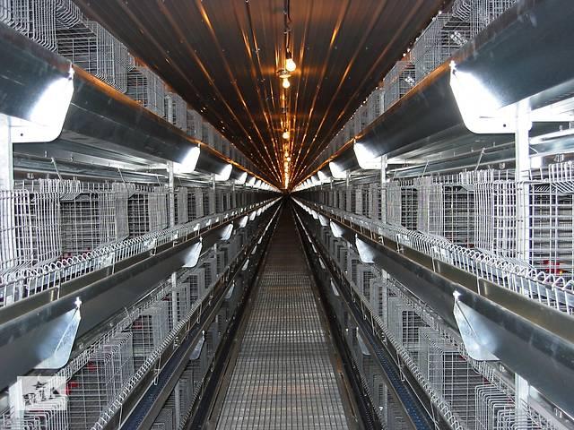 """бу Клетка для кур- бройлеров на 21 голову взрослых кур """"Facco""""(Италия) на 3 отсека, клетки для кур в Бахмуте (Артемовск)"""