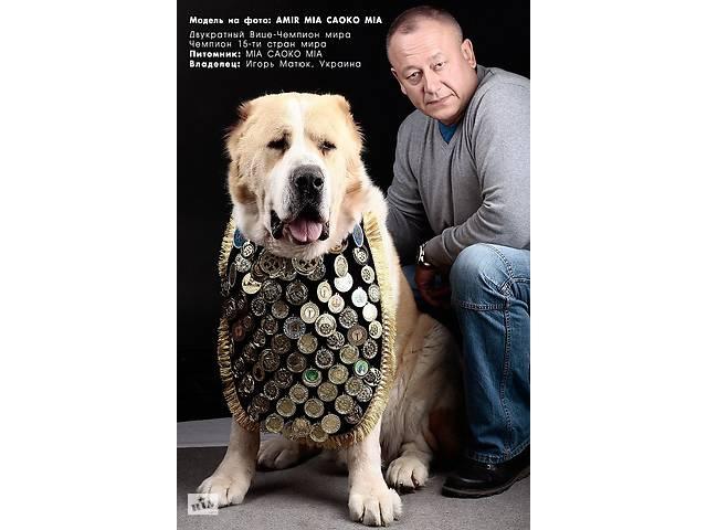 бу Нагрудник для нашивки медалей (нагород) для собак чорний з сріблом в Києві