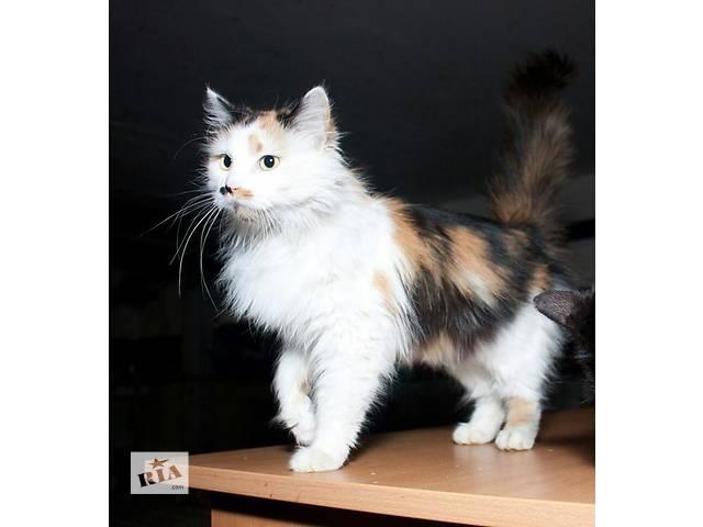 бу Очаровательная кошечка Сюзанна в поисках дома! в Киеве