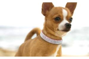 Ошейник горный хрусталь для небольших средних собак кошек Чихуахуа Мопc