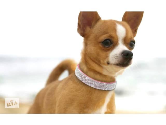 купить бу Ошейник горный хрусталь для небольших средних собак кошек Чихуахуа Мопc в Ірпені