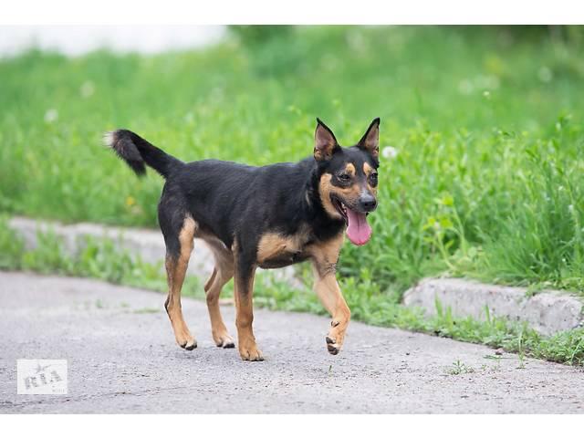 Отдам в хорошие руки пса Бифа.- объявление о продаже  в Киеве