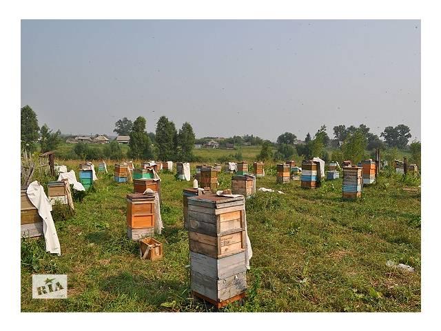 Продам пчелосемьи украинской степной породы (рутовская система)