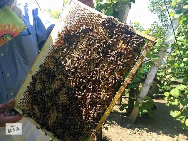 Терміново! Закарпаття. Продам бджолопакети, Карпатка. Ціна договірна.