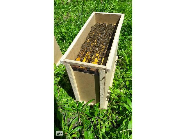 продам Пчелопакеты с доставкой карпатка , пчелопакеты 2018 бу в Запорожье