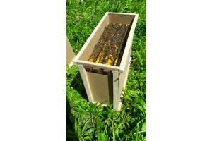 Пчелосемьи, пчелопакеты Карпатка 2020 с Доставкой