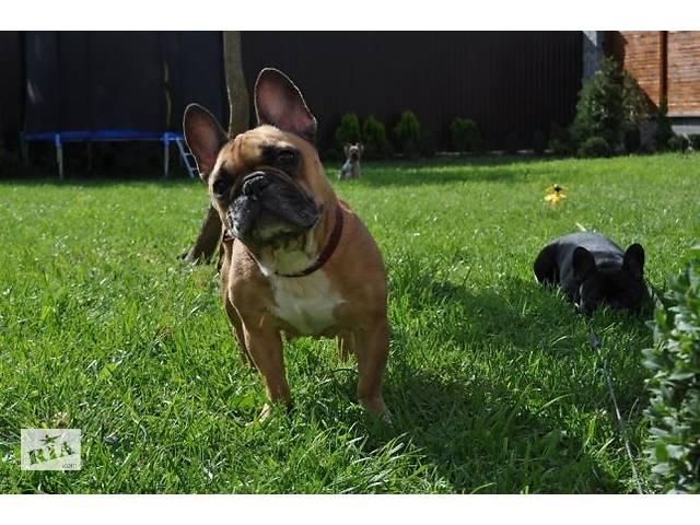 продам передержкa собак разных пород  бу в Виннице