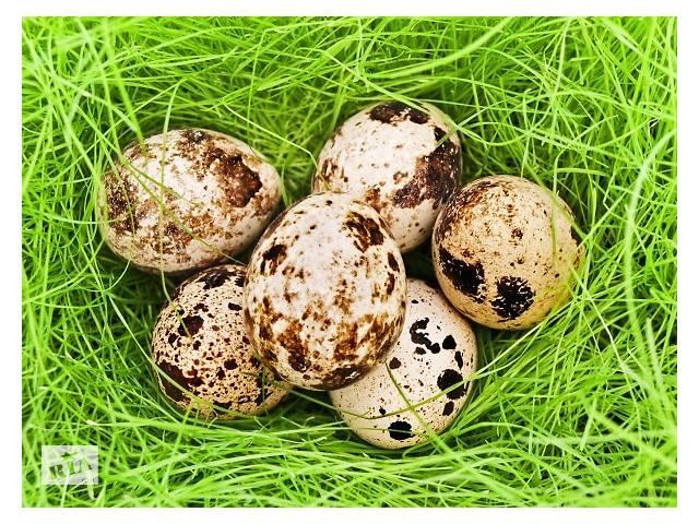 бу перепелині яйця в Львове