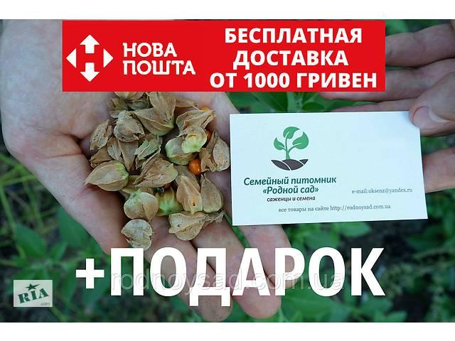 продам Ашвагандха семена (20 штук) (ашваганда, индийский женьшень) + инструкция + подарок бу в Андреевке