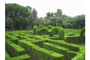 Декоративно-лиственныерастения