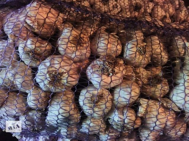 купить бу Чеснок Софиевский (Софиевский) первая репродукция, посадочный зубок в Виннице