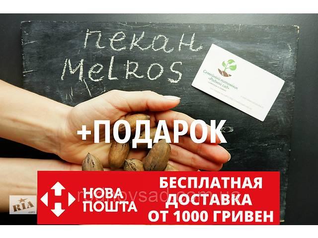 """продам Пекан (10 штук) сорт """"Melros"""" (ранний) семена орех кария для саженцев (насіння на саджанці)Carya illinoinensis бу в Андреевке"""