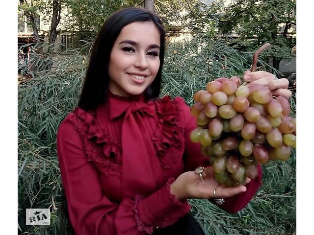 продам Саженцы винограда элитных сортов бу в Нововоронцовке