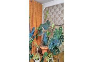 Субтропічні рослини