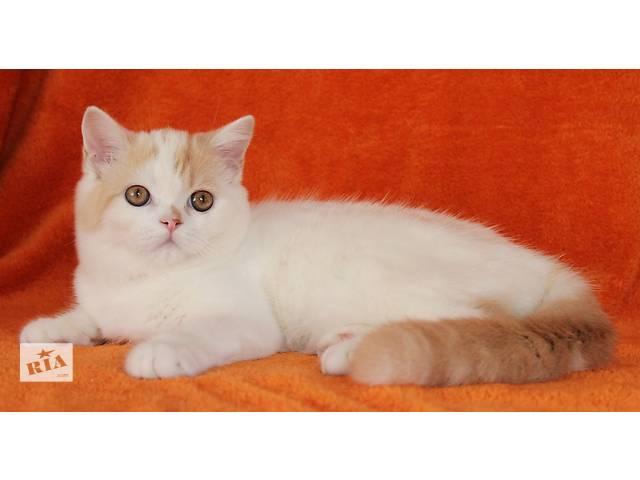 Продается кот- объявление о продаже  в Киеве