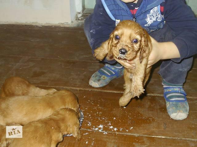 продам 4 сыночка-щеночка и лапочку дочку- объявление о продаже  в Виннице