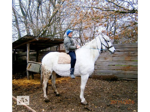 продам Продам  кобилу  бу в Теплике