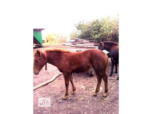 продам коня- объявление о продаже  в Горохове