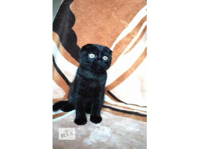 купить бу Продам шотландских вислоухих котят в Киеве